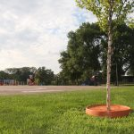 tree pan | parks | more efficiently retain moisture when watering trees